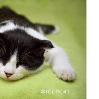 モヤモヤさま~ず 調布20170910