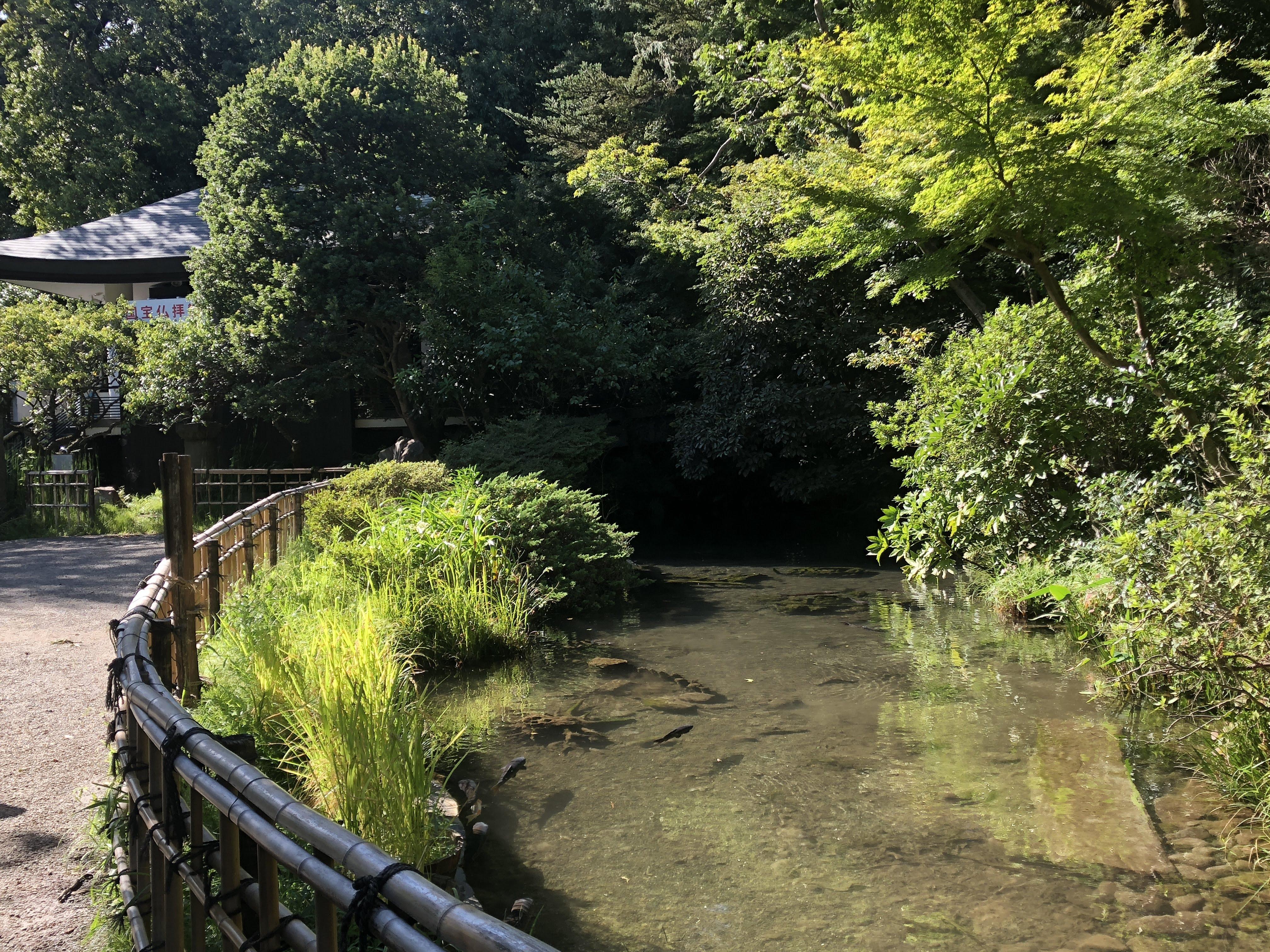 調布「深大寺」境内の池