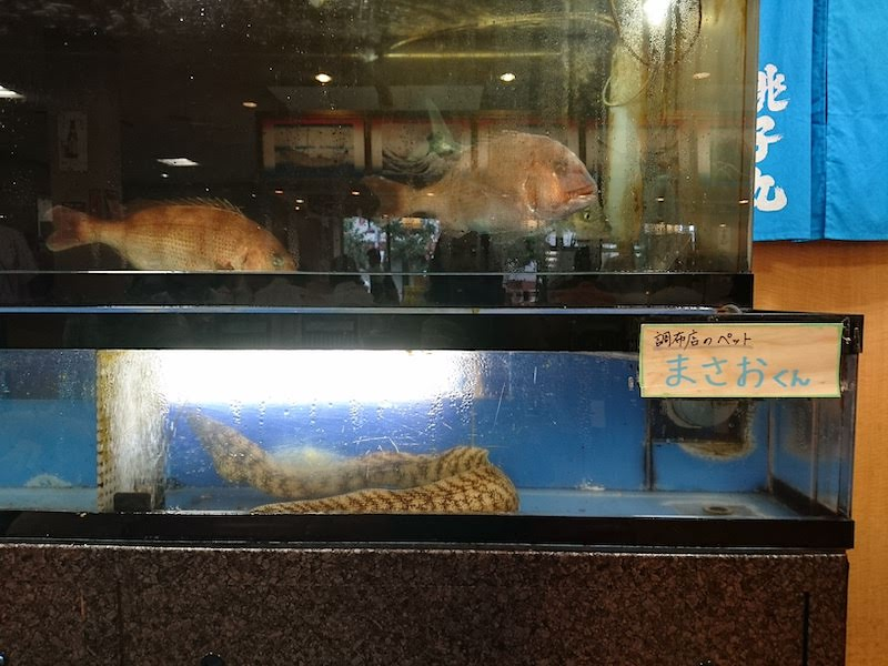 調布寿司祭り「すし銚子丸」生簀とペットのまさおくん