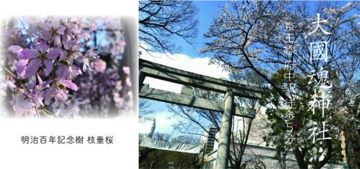 府中「大國魂神社2019年枝垂桜」アイキャッチ