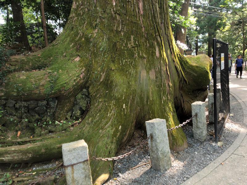 高尾山「1号路 登山」たこ杉
