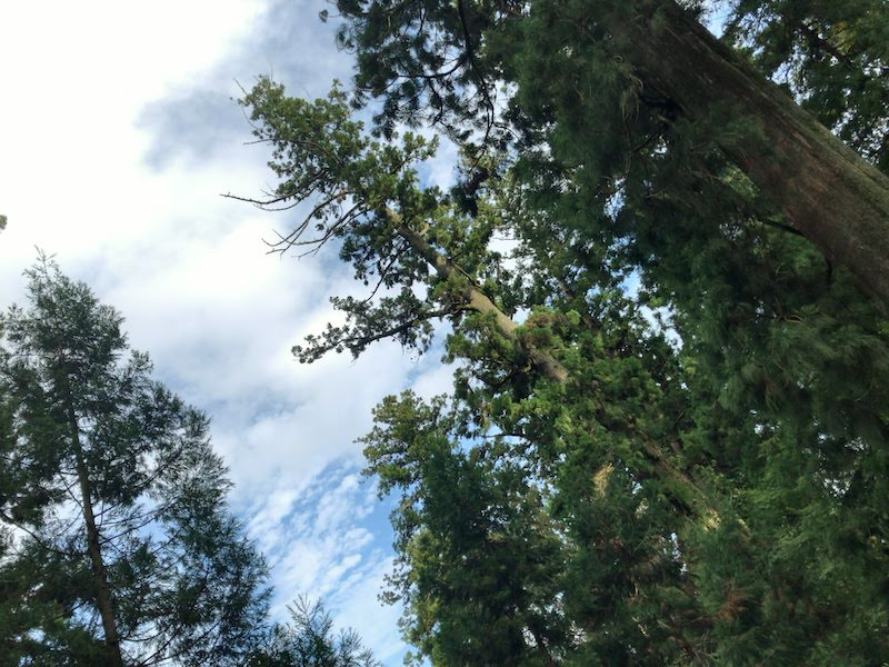 高尾山「1号路 登山」杉並木